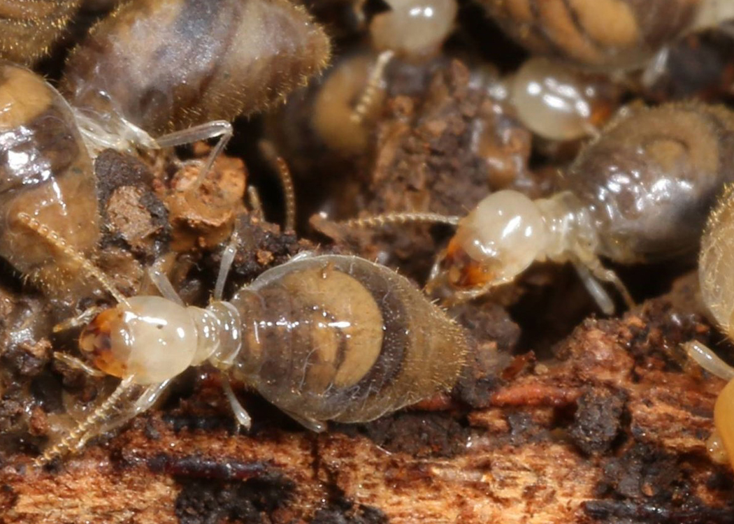 How Often Should I Get a Termite Inspection