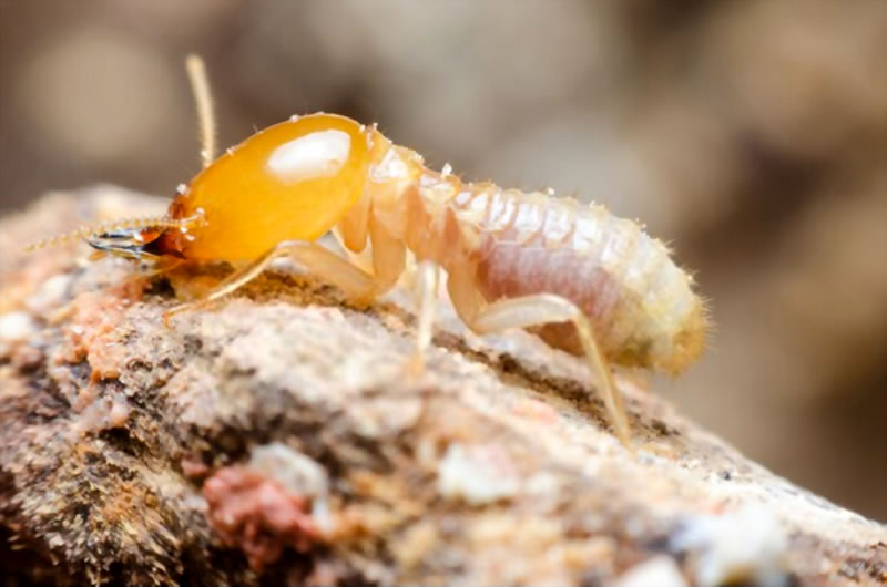 How termite barriers work