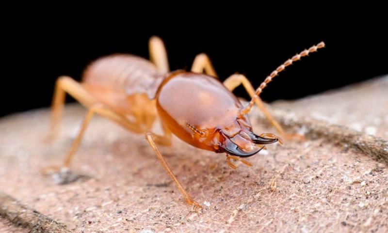 Exterminating active colonies