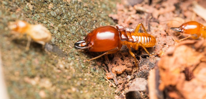 Termite Preventative Treatment Costs